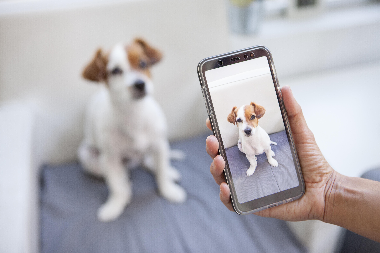Custom Pet Phone Case